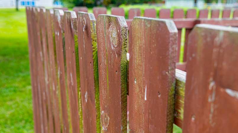 Fence Mildew