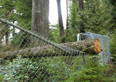 Fallen Tree on Chain Link Fence
